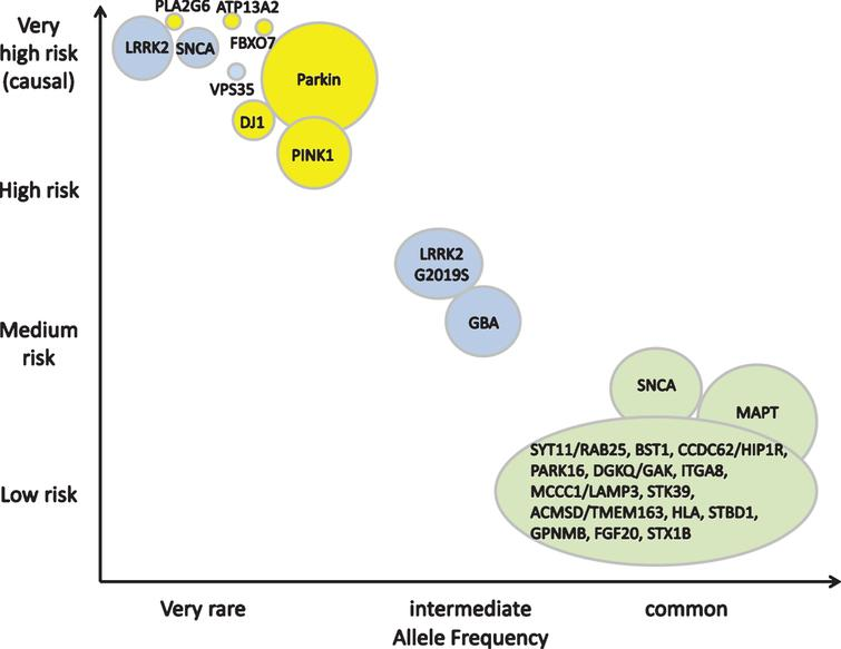Genetic architecture of Parkinson's disease. Continuum of variants of different effect strengths and allele frequencies. The size of the bubbles roughly corresponds to population allele frequencies. Colors symbolize modes of inheritance: dominant (blue), recessive (yellow), risk loci (green). Modified from [35] and [36].