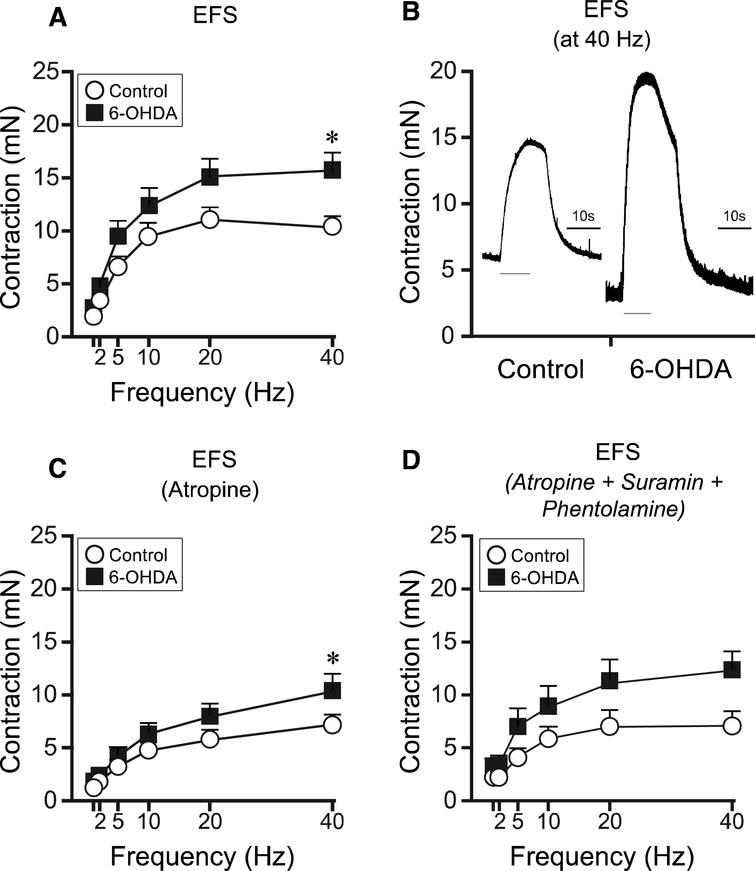 EFS-induced bladder responses in bladder strips in controls and 6-OHDA-lesioned rats. Following EFS the bladder strips from 6-OHDA-lesioned rats (n = 16) showed an overall significantly higher contractile response as compared to controls (n = 26; A, B). In the presence of atropine the EFS response was reduced in both groups by 31% and 33% for controls and 6-OHDA respectively (C). However a significant difference could still be observed at 40 Hz. Following administration of phentolamine (10 − 5M) together with suramin and atropine, no change in contraction in the control (n = 7) as compared to 6-OHDA (n = 7) was observed (p = 0.094; D). The grey thin line under the responses in panel C represent the duration of the electric stimulation.  * = significantly different from control group. [Two-way repeated ANOVAs; (A) interaction: F(5, 200) = 3.86, p = 0.00023, Group: F(1, 40) = 4.15, p = 0.048; (C) interaction: F(5, 200) = 2.86, p = 0.016, Group: F(1, 40) = 1.96, p = 0.17; (D) interaction: F(5, 60) = 1.98, p = 0.094, Group: F(1, 12) = 3.09, p = 0.10. All ANOVAS are followed by a Bonferroni multiple comparison test].