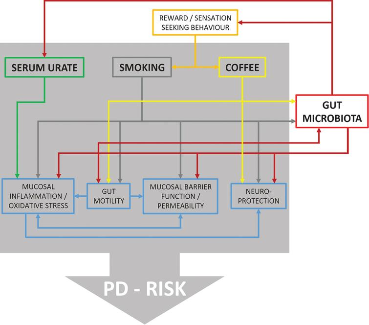 Flow chart illustrating reported effects between urate, smoking, coffee, and different physiological domains with possible relevance for PD risk. Furthermore, it is shown which of these factors are also related to changes in gut microbiota providing ground for interactions. However, at present direct evidence for such interactions is missing and information is derived from in vitro as well as in vivo studies on humans and animal models.