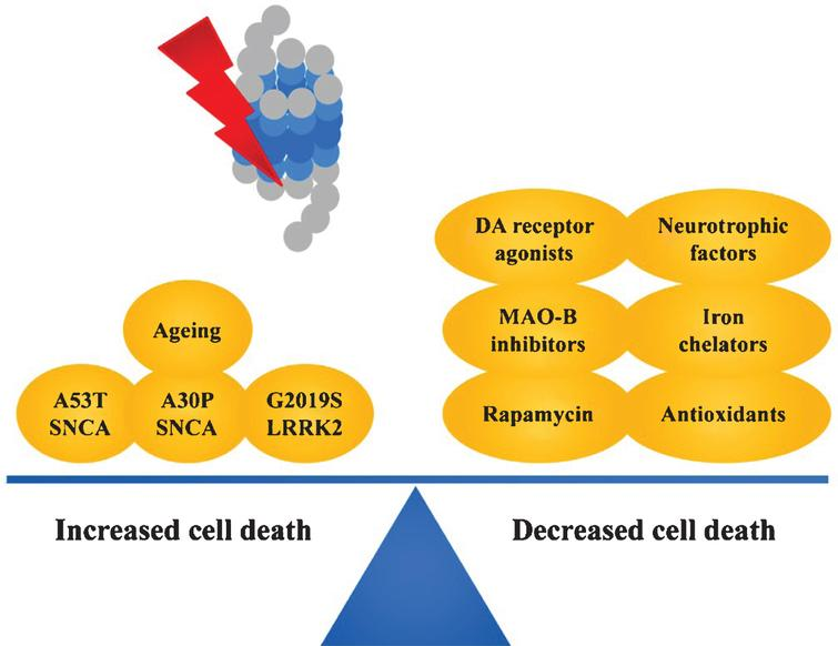 Factors influencing cell death following application of proteasome inhibitors. See text for details.