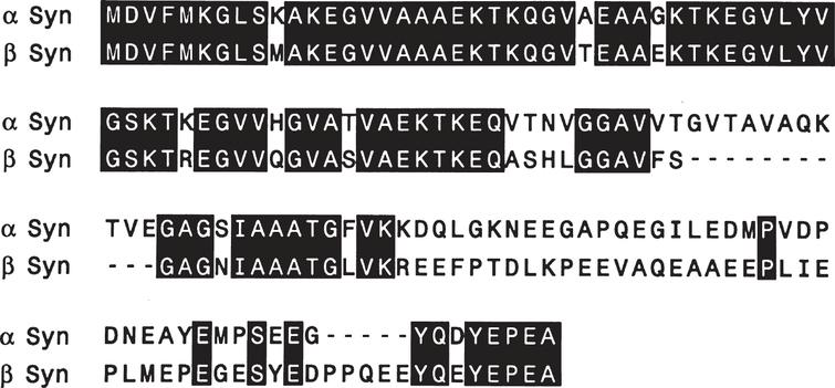 Sequence comparison of human α-synuclein and β-synuclein. Amino acids were aligned and two gaps introduced to maximize homology. Amino acid identities between α-synuclein (α-Syn) and β-synuclein (β-Syn) are indicated by black bars. From Jakes et al. [36].