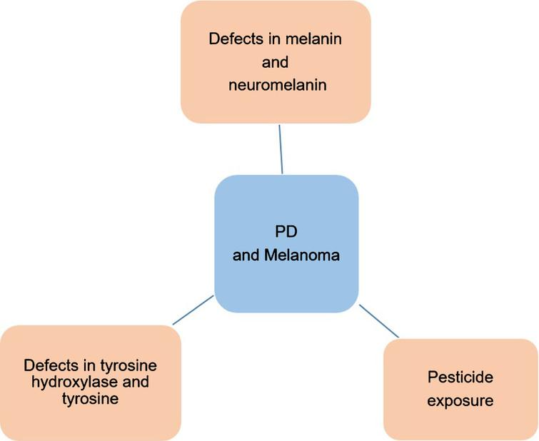 Schematic representation of possible mechanisms that can explain the co-occurrence of PD and melanoma.