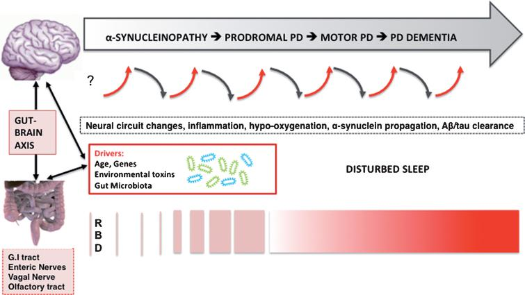 Hypothesized bidirectional changes between the presence of disturbed sleep, risk, and progression of PD. The selected neurodegenerative mechanisms do not follow a pre-specified order and likely overlap.
