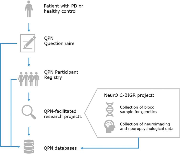 Quebec Parkinson Network (QPN) workflow for collection of patient data. Patients with PD or healthy controls who are recruited to the QPN Participant Registry must complete the QPN Questionnaire. Active members of the QPN Participant Registry may be selected for participation in QPN-facilitated research projects, such as the NeurO C-BIGR project which involves collection of blood samples for genetics and iPSCs derivation, as well as neuroimaging and neuropsychological data. Patient data collected through the QPN Questionnaire, medical records of patients in the QPN Participant Registry, and obtained via QPN-facilitated research projects are entered into the QPN databases.