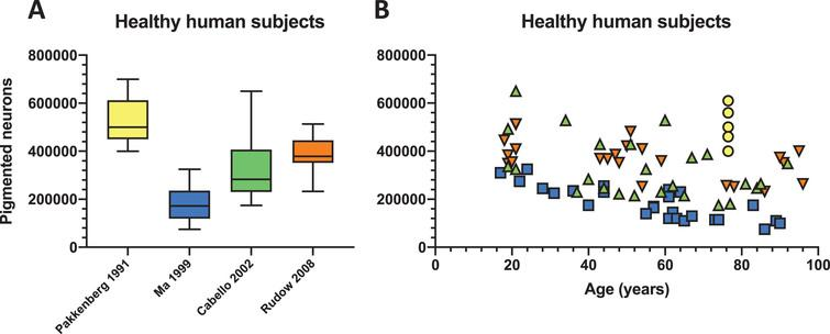 Natural variation in the number of pigmented neurons in healthy human. Four studies employing stereological quantification of the number of nigral pigmented neurons [9, 15–17] were selected and (A) depicted in a box and whisker plot showing considerable variation in healthy human subjects. (B) The same data were also plotted against ageing where the first five decades where the brain should be relatively unaffected by various confounders (e.g., ageing) retains a high degree of variability in the number of pigmented neurons. Some aged individuals in the eighth and ninth decade show a very high number of pigmented neurons comparable to individuals in their twenties.