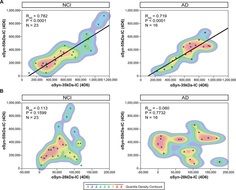 Relationships between 28-, 35- and 55kDa αSyn oligomers in human brain tissue from cognitively intact subjects and subjects with AD within the ROS cohort. Regression analyses and quantile density contours for pair-wise comparisons between 35kDa (A) or 28kDa (B) dimeric αSyn and the ∼55–56kDa putative αSyn tetramer detected in the intracellular-enriched fraction (IC). All species were detected with the monoclonal antibody 4D6. NCI, no cognitive impairment; AD, Alzheimer's disease; ROS, Religious Orders Study.