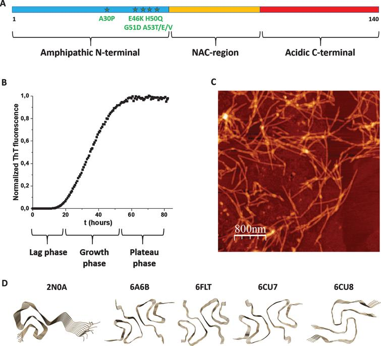 A) Scheme of aS's polypeptide with N-terminal (blue), NAC (yellow) and C-terminal (red) parts indicated as well as known disease-causing mutations (stars). B) Typical aggregation curve of aS as probed by ThT fluorescence (lag, growth and plateau phases indicated). C) AFM image of aS amyloid fibers. D) High-resolution structures (2N0A, 6A6B, 6FLT, 6CU7, and 6CU8; Table 1) of aS amyloid fiber cores.