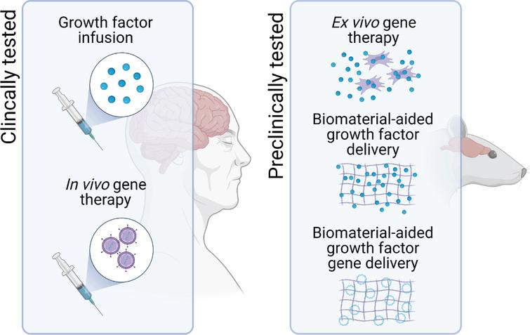 Potential delivery systems for neurotrophic growth factor delivery in PD. To assess the therapeutic potential of neurotrophic factor therapy, direct infusion of the growth factor protein into the target brain region and in vivo gene therapy have progressed to clinical trials in patients with PD. However, one of the major hurdles to the clinical translation of growth factor therapeutics for PD remains issues related to the delivery of these protein drugs. To address this, other delivery systems, including ex vivo gene therapy and biomaterial-aided protein and gene delivery are in preclinical development.