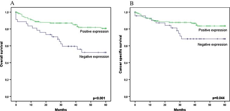 Survival analysis based on EPO epression. (A) 5-years OS curves (B) 5-year CSS curves.