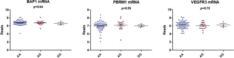 Boxplot showing the correlation between BAP1, PBRM1 and VEGFR3 mRNA expression and rs307826 genotypes (ANOVA).