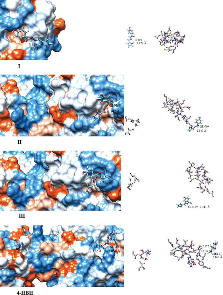 Docking pictures of 4-HBH and I, II and III compounds.