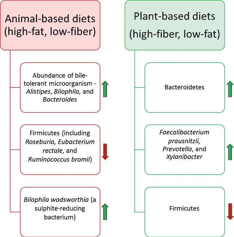 Impact of the diet on the human gut microbiota composition. Diet is one of the most influential factors for altering the composition of the gut microbiota. Animal-based diets promote the growth of bile-tolerate microorganisms. In contrast, plant-based diets elevate the abundance of polysaccharides-digesting bacterial species.