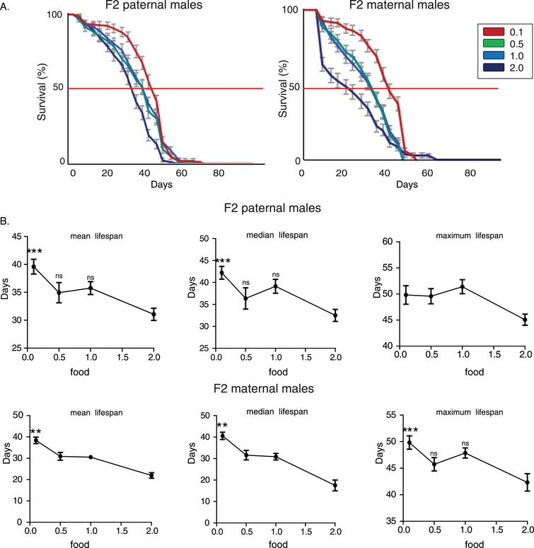 Starvation-induced transgenerational effect on longevity is evolutionarily conserved in Drosophila melanogaster. A) Lifespan curves of F2 males (CS strain) from paternal and maternal grandfathers exposed to different dietary conditions. F2 virgin males whose paternal grandfathers had experienced starvation through larval stages (F2 paternal 0.1 males) were long-lived compared to the other groups. F2 (paternal) 0.1 vs. 0.5: p<1.2×10–4, F2 (paternal) 0.1 vs. 1.0: p<0.014 and F2 (paternal) 0.1 vs. 2.0: p<1.7×10–21, log rank test. Also, F2 virgin males whose paternal grandfathers were fed under the richest conditions through larval stages (F2 paternal 2.0 males) were the shortest lived compared to the other groups. F2 (paternal) 2.0 vs. 1.0: p<1.7×10–9, F2 (paternal) 2.0 vs. 0.5: p<5.7×10–7, log rank test. F2 virgin males whose maternal grandfathers had experienced starvation through larval stages (F2 maternal 0.1 males) were also long-lived compared to the other groups. F2 (maternal) 0.1 vs. 0.5: p<7×10–14, F2 (maternal) 0.1 vs. 1.0: p<1.6×10–14 and F2 (paternal) 0.1 vs. 2.0: p<1×10–40, log rank test. On the contrary, the richest conditions of larval feeding (F2 maternal 2.0 males) led to significant lifespan reduction. F2 (paternal) 2.0 vs. 1.0: p<1.3×10–11, F2 (paternal) 2.0 vs. 0.5: p<7×10–12, log rank test. Lifespan data shown are from a single trial. For each lifespan experiment n>260. Error bars indicate SEM. B) Mean, median and maximum lifespan of F2 males from paternal and maternal grandfathers exposed to different dietary conditions. Grandparents' feeding affected mean, median but not maximum lifespan in F2 paternal flies (the mean lifespan of the longest-lived 10% of flies); F2 (paternal) 0.1 vs. 2.0: p<0.001, q=4,404 and p<0.001, q=3.912, for mean and median lifespan respectively. Ancestor's feeding affected more pronouncedly lifespan values in maternal grandsons (F2 maternal 0.1 vs. 0.5: p<0.01, q=3,739 and p<0.01, q=3,204 for mean and median lifespan respe