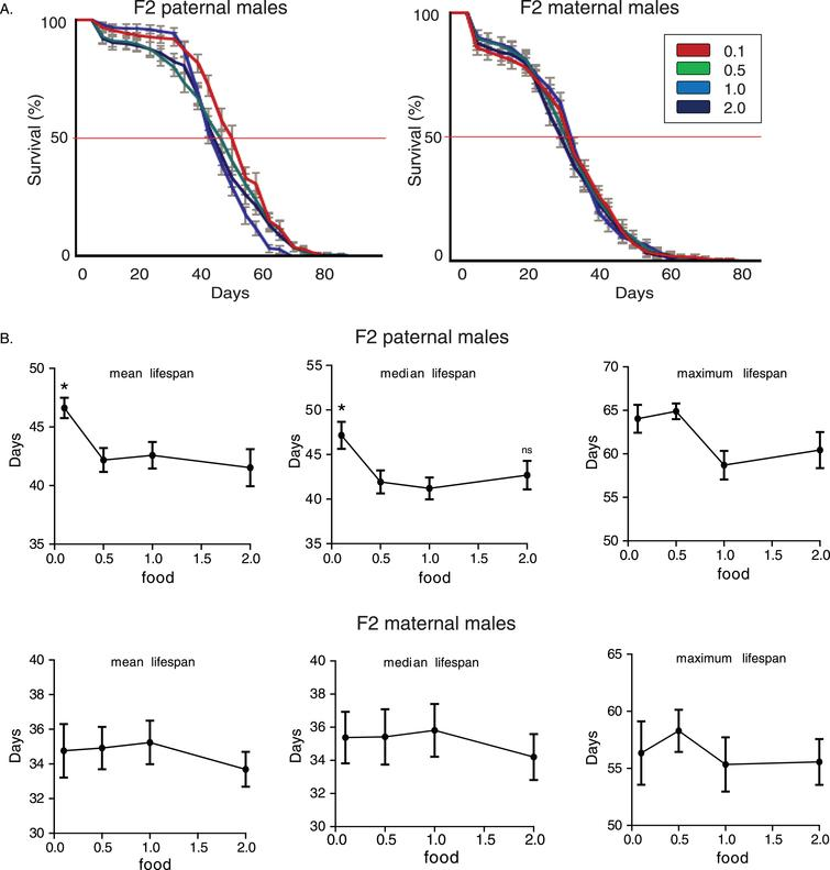 Nutritional regulation of transgenerational longevity in wDah strain is sex-specific. A) Lifespan curves of F2 males from paternal and maternal grandfathers subjected to different dietary regimes through larval stages. F2 virgin males whose paternal grandfathers had experienced starvation through larval stages (F2 paternal 0.1 males) were long-lived compared to the other groups. F2 (paternal) 0.1 vs. 0.5: p<0.042, F2 (paternal) 0.1 vs. 1.0: p<4×10–6 and F2 (paternal) 0.1 vs. 2.0: p<0.0025, log rank test. Lifespan curves did not differ significantly in F2 virgin males whose maternal grandfathers were reared under different food conditions (F2 maternal males) (p>0.05, log rank test). Lifespan data shown are from a single trial. For each lifespan experiment n>260. Error bars indicate SEM. B) Mean, median and maximum lifespan of F2 males from paternal and maternal grandfathers exposed to different dietary conditions. Mean and median, but not maximum, lifespans were significantly increased in F2 parental males. F2 (paternal) 0.1 vs. 0.5: p<0.05, q=2.54, p<0.05, q=2.49 and p>0.05, q=0.356, F2 (paternal) 0.1 vs. 1.0: p<0.05, q=2.54, p<0.05, q=2.89 and p>0.05, q=1.696, F2 (paternal) 0.1 vs. 2.0: p<0.05, q=3, p>0.05, q=2.203 and p>0.05, q=1.548, for mean, median and maximum lifespan respectively. However, ancestor's diet during larval stages did not significantly affect lifespan of F2 maternal males. One-way ANOVA with Dunnett's multiple comparison against F2 0.1 flies. For each lifespan experiment n>13, *p<0.05. Error bars indicate SEM.