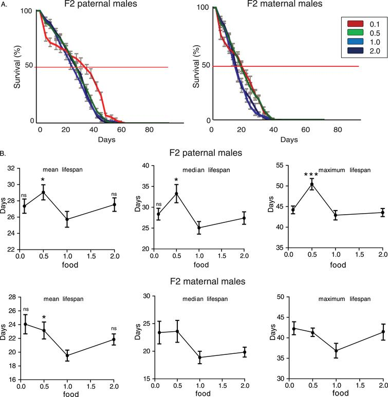 Dietary restriction during adulthood induces transgenerational effects on longevity. A) Lifespan curves of F2 males from paternal and maternal grandfathers subjected to different dietary regimes through adult stages. F2 virgin males whose paternal grandfathers had experienced starvation through adult stages lived longer; F2 (paternal) 0.1 vs.. 0.5: p<1.47×10–9, F2 (paternal) 0.1 vs.. 1.0: p<3.6×10–10 and F2 (paternal) 0.1 vs.. 2.0: p<3×10–12, log rank test. In F2 maternal males, dietary restriction and starvation of F0 males induced similar effects; F2 (maternal) 0.5 vs. 0.1: p>0.9, F2 (maternal) 0.5 vs. 1.0: p<8×10–7, F2 (maternal) 0.5 vs. 2.0: p<0.0049, F2 (maternal) 0.1 vs. 1.0: p<1×10–6, F2 (maternal) 0.1 vs. 2.0: p<0.0049, log rank test. Lifespan data shown are from a single trial. For each lifespan experiment n>260. Error bars indicate SEM. B) Mean, median and maximum lifespan of F2 males from paternal and maternal grandfathers exposed to different dietary conditions during adulthood. F2 (paternal) 0.5 vs. 0.1: p<0.001, q=4.097, for maximum lifespan, F2 (paternal) 0.5 vs. 1.0: p<0.05, q=2.512, p<0.01, q=3.326, p<0.001, q=4.6 for mean, median and maximum lifespan, F2 (paternal) 0.5 vs. 2.0: p<0.05, q=2.456 and p<0.001, q=4.34, for median and maximum lifespan. F2 (maternal) 0.5 vs. 1.0: p<0.05, q=2.457 for mean lifespan, F2 (maternal) 0.1 vs. 1.0: p<0.05, q=2.95, for mean lifespan, one-way ANOVA with Dunnett's multiple comparison against F2 0.5 flies. For each lifespan experiment n>13, *p<0.05, ***p<0.001. Error bars indicate SEM.