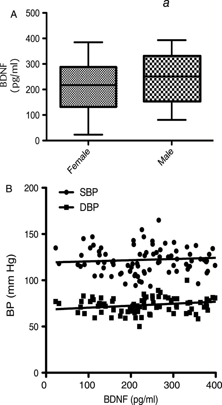 Corellation of BDNF with anthopometric  measures: (A) Serum BDNF levels measured in males and females at baseline. (B) Correlation of BDNF level with  Systolic Blood Pressure (SBP) and Diastolic Blood Pressure (DBP). Mean serum BDNF levels showed a trend to be  higher in males compared to females (p = 0.056), whilst no significant differences between BDNF level  and either SBP (p > 0.05) or DBP (p > 0.05) were observed.