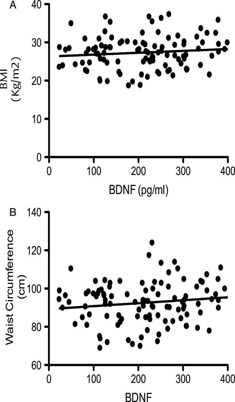 Corellation of BDNF with bidy mass index (BMI; panel A) and waist circumferance (WC; panel B). No signitivent correlations were observed (p > 0.05; n = 112)