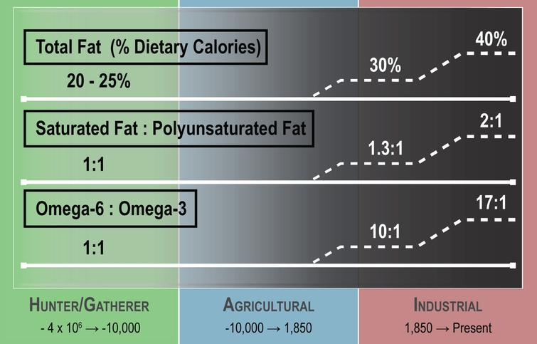 Dietary fat composition changes over human existence. Human food composition has changed considerably over the course of time. Dietary fat accounted for at most 25% of total calories in the early Hunter/Gatherer time period but has increased to as much as 40% in the present day. The fat composition in the diet has also changed over time, with a higher ratio of saturated fat to polyunsaturated fat and a greater omega-6 to omega-3 ratio in the modern era when compared to earlier time periods. (Figure adapted from [4]).