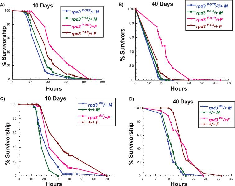 rpd3 reduction affects stress resistance in flies. (A, B) Survival curves for male and female rpd3P-UTR/+ (experimental) and rpd3P-1.8/+ (control) flies exposed to 20 mM paraquat at age 10 (A) or 40 (B) days. rpd3P-UTR/+ females are more resistant to paraquat at 10 and 40 days, but no changes in resistance were observed in male rpd3P-UTR/+ flies. (C, D) Survival curves for male and female rpd3def/+ and control flies exposed to 20 mM paraquat at age 10 (C) or 40 (D). Male rpd3def/+ flies are more resistant and female rpd3def/+ are less resistant compared to control flies at age 10. No difference in paraquat resistance was observed between rpd3def/+ male and female and control flies at 40 days.
