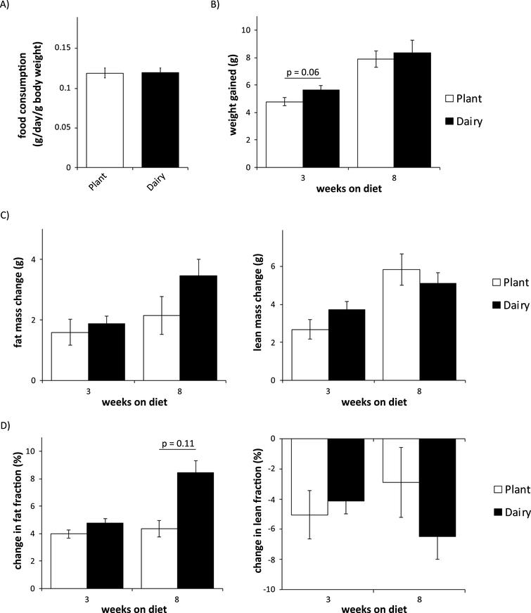 Mice consuming plant or dairy protein diets have similar food consumption, weight gain, and body composition. (A) Food consumption was measured after 2 weeks on either diet. (B) Weight was determined immediately prior to diet start and after 3 and 8 weeks. (C-D) Fat and lean mass (C) and fat and lean fraction (D) were determined immediately prior to diet start and after 3 and 8 weeks. (n = 9/group; two-tailed t-test, * = p < 0.05). Error bars represent SE.