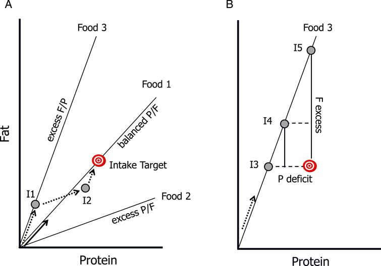 "Core concepts of the Geometric Framework for Nutrition. The intake target represents the optimal amount and balance of the nutrients required by the animal. Radial lines are ""rails"" showing the ratio of the nutrients in foods, and grey circles represent hypothetical nutrient intakes (I1 –I5). As the animal eats it ""moves"" along a trajectory at an angle equal to the angle of the rail for the food it is eating (arrows), with sequential arrows representing intake trajectories. A) Food 1 is balanced with respect to the protein:fat ratio (P:F): it passes through the Intake Target, and thus enables the animal to directly reach the target (solid arrow). In contrast, Foods 2 and 3 are imbalanced (excess P and F respectively) and do not enable the animal to reach the target. It can, however, reach the target by mixing its intake from these ""nutritionally complementary"" foods (dotted arrows): for example, by first feeding on Food 3 to point I1, then switching to Food 2 at I2 switching back to Food3. B) If restricted to a single imbalanced food, the animal faces a trade-off between over-eating one nutrient and under-eating another. At I3 it meets its requirements for fat but suffers a protein deficit, at I5 it has optimal protein intake but excess fat, and at I4 it has both a moderate excess of fat and deficit of protein."