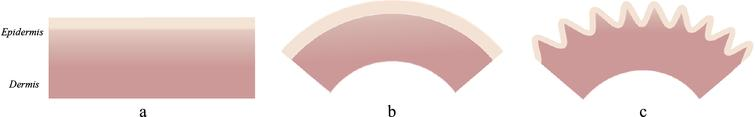 Wrinkling in the bi-layer skin model with bending: a – bi-layer composite epidermis/dermis; b – bending of this composite; c – wrinkling of the bended composite (modified after [55]).