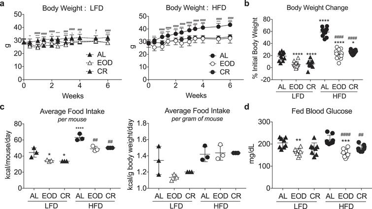 Modulation of body weight and blood glucose with different intermittent fasting regimens and diets. (a) Time-dependent changes in body weight over 6 weeks of the indicated dietary regimen (AL, EOD or CR) on LFD (left) or HFD (right). Asterisk: AL vs. EOD; pound sign: AL vs. CR within diet group using repeated measures two-way ANOVA with a Dunnett's post-hoc test. (b) Final body weight expressed as a percent change of initial body weight. (c) Average food intake in kcal/mouse/day (left) or kcal/gram of mouse body weight/day over the course of 6 weeks of dietary intervention. Each symbol represents a separate cage of 4 animals. (d) Fed blood glucose levels following 6 weeks on the indicated diet, and after a fed day in the EOD groups. (b-d) Asterisk: comparison of all groups to AL LFD; pound sign: comparison of HFD groups to AL HFD using one-way ANOVA with a Sidak's post-hoc test; */#P < 0.05, **/# #P < 0.01, ***/# # #P < 0.001, ****/# # # #P < 0.0001. All data are expressed as mean±SD.