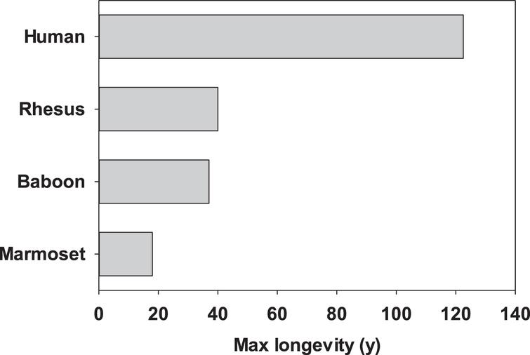 Maximum reported lifespans for four primary primate species used in aging research.