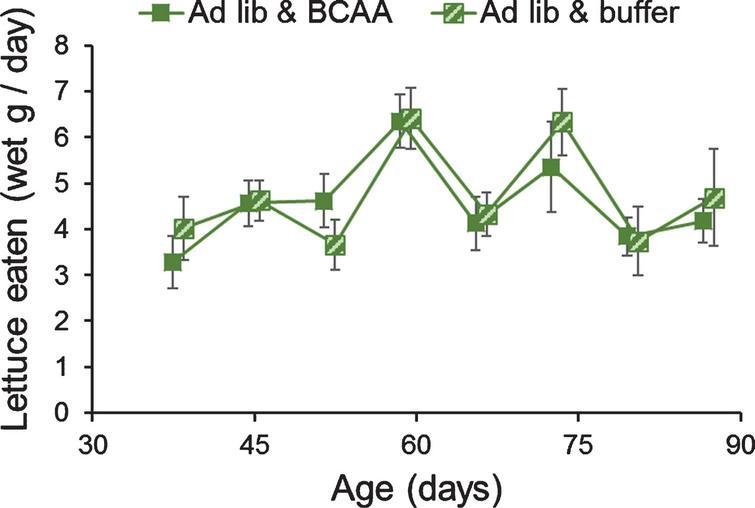 Dietary supplementation of BCAAs did not alter lettuce feeding in grasshoppers. Adult female grasshoppers were reared on ad libitum lettuce & BCAA or on ad libitum lettuce & buffer. Age refers to days after adult molt. Feeding rates varied week to week, but not due to supplementation of BCAAs. Data were tested via one-way repeated-measures ANOVA. Data are offset to show±1 Standard Error bars.