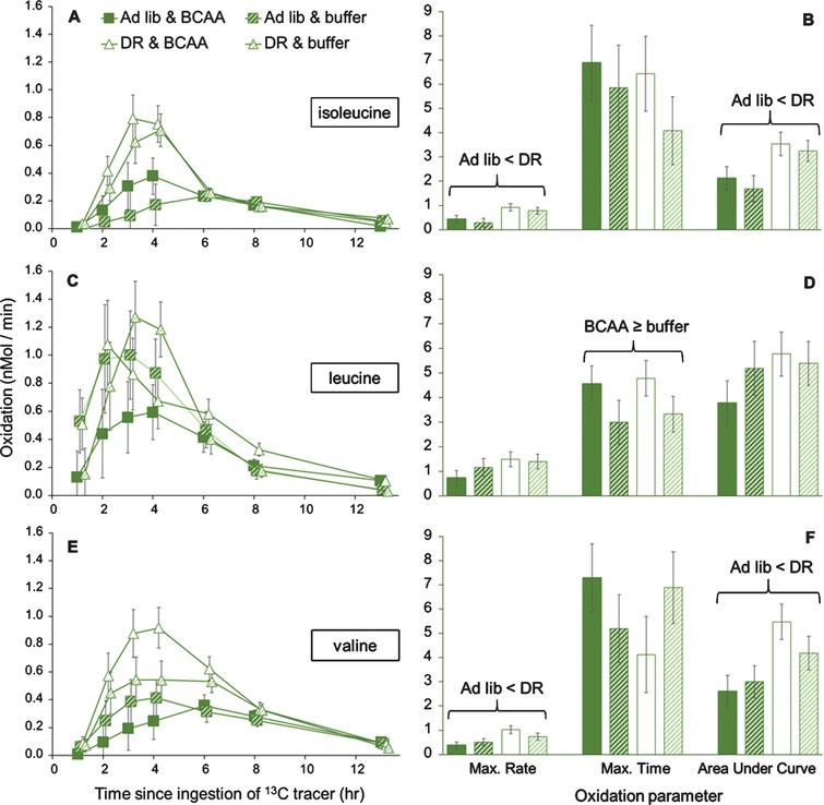 Organismal oxidation of individual BCAAs upon ad libitum or DR lettuce feeding and supplementation with BCAAs or buffer, in female grasshoppers. Panels A and B show oxidation of isoleucine, panels C and D show oxidation of leucine, and panels E and F show oxidation of valine. Life-extending dietary restriction of lettuce increased oxidation of isoleucine and valine at the periods of greatest oxidation, with significant changes in the maximum rate of oxidation and the cumulative oxidation (i.e., Area Under the Curve), as shown by two-way MANOVA. Dietary restriction did not alter oxidation of leucine, though BCAA supplementation tended to result in earlier oxidation of leucine. For panels B, D, and F, maximum rates are nMol / min, maximum times are hours after tracer ingestion, and Area Under the Curve is in nMol/min * 100. Trials were run at middle-age, ∼90 days into adulthood. Data are offset to show standard error bars.