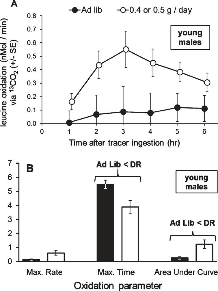 In young adult male grasshoppers, organismal oxidation of leucine was increased upon a 30% diet. A) The 30% diet marginally increased oxidation of leucine from 2 to 5 hours after tracer ingestion. B) The 30% diet significantly decreased the time of occurrence of the maximum rate of oxidation (hours after tracer ingestion) and significantly increased the Area Under the Curve (nMol/min * 100), but did not change the maximum rate of oxidation (nMol/min). Oxidation curve data were tested with one-way MANOVA with time as a dependent variable, and oxidation parameters were tested with Student t-tests. Error bars show one Standard Error.