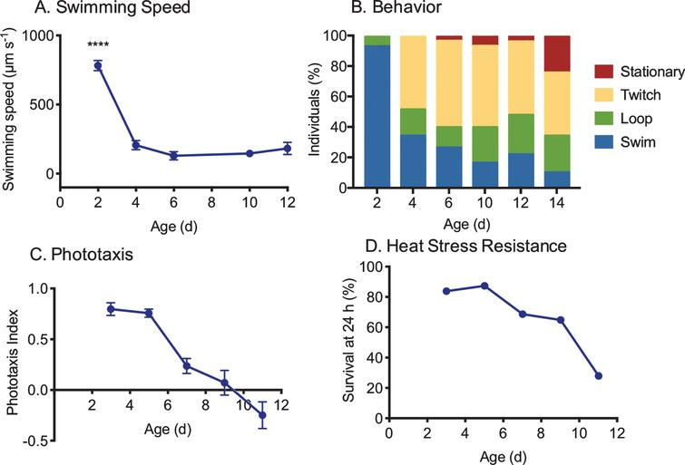 Measures of changes in health with age in asexual, female Brachionus manjavacas (K. Gribble, unpublished data). As rotifers age, (A) swimming speed declines (n=30), (B) behavior changes from primarily swimming in a straight line or in large circles to predominantly stationary or twitching movements with no forward motion (n=30), (C) phototaxis (the tendency to swim toward a light source) declines (n=10/replicate, 5 replicates per age), and (D) survival 24 hours after exposure to heat stress declines by 75% (n=48 per age).