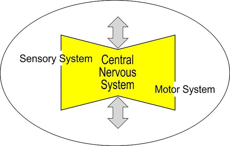 Age-adjusted work design via obeying the effects of aging on the sensory and motor system and on the central nervous system.