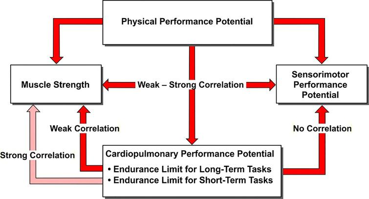 Outline of physical performance potential.