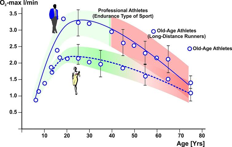 Maximum oxygen uptake of men and women in dependence on age. Means from 2334 subjects, according to Hollmann. Source[8].