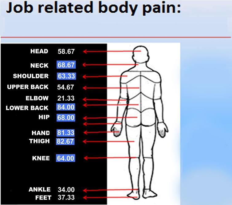 Percentage of motorbike riders experienced pain in different body parts (adapted from Nordic questionnaire).
