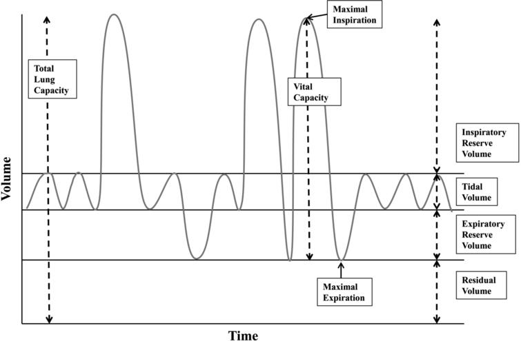 Respiratory parameters in pulmonary function testing. Total lung capacity is the amount of air in the lungs after maximal inspiration and is about 4 L to 6 L in adults with volumes varying depending on age, sex, and body composition[93, 94, 95]. Tidal volume is the amount of air inhaled and exhaled during quiet breathing. In healthy adults, tidal volume is between 400–500ml, approximately 10% of the total lung volume[96]. Vital capacity is the maximal amount of air that can be exhaled after maximal inhalation[97]. Vital capacity is composed of the tidal volume, inspiratory reserve volume, and expiratory reserve volume. Two common measures for vital capacity are the forced vital capacity which is the maximal amount of air that can be exhaled at maximum speed and effort following maximal inspiration, and slow vital capacity which is the maximal amount of air that can be slowly exhaled following maximal inspiration. Forced expiratory volume at 1 second is the maximal amount of air that can be exhaled in 1 second following maximal inspiration[98]. Residual volume is the amount of air remaining in the lungs after maximal expiration.