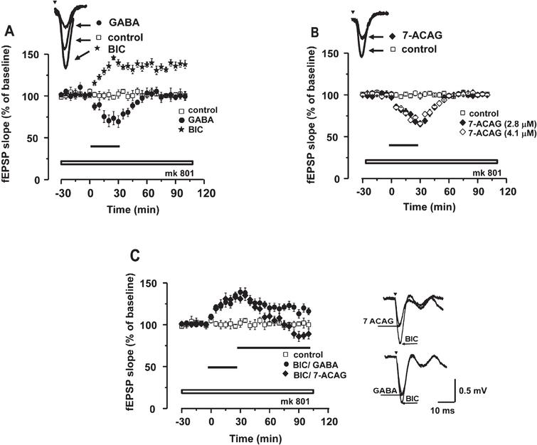 7-ACAG and its possible GABAergic activity in hippocampal slices. Temporal course of evoked field Excitatory Post-synaptic Potentials (fEPSP) amplitude during 2h of recording. Data group (mean ± Standard error of the mean [SEM]) of the fEPSP slope before, during, and after drug exposure. Horizontal bars indicate time of drug superfusion (30min), while the log bar indicates that all experiments were carried out in the presence of MK801 (5mM) (Representative traces; calibration: 0.5 mV: 10ms). A) Gamma-Aminobutyric acid (GABA) (3mM; black circles) reduces the synaptic response; this effect is reversible. Bicuculline (BIC) (20 μM; black stars) induces long-lasting hyperexcitability. B) Application of 7-ACAG at two different concentrations (2.8 μM; black rhombus, and 4.1 μM; white rhombus) exerts a reversible decreasing effect on the synaptic response slope of the CA1 area. C) GABA administration decreases the hyperexcitability effect induced by BIC (black circles). Moreover, application of 7-ACAG blocked this same hyperexcitability effect.