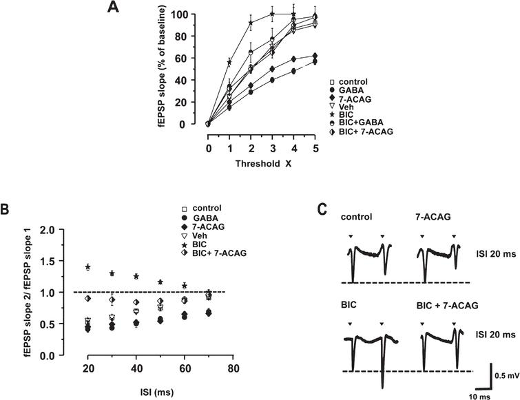 7-ACAG increases Paired-pulse (PP) inhibition and reduces the Bicuculline (BIC) hyperexcitability effect. A) The control Input/Output curve (I/O; white squares) illustrates that the increase of the synaptic responses (field Excitatory Post-synaptic Potentials, fEPSP) of the CAI area is proportional to the increase of the synaptic stimulation. Threshold is defined as the initial response from which negative amplitude is obtained and that increases by 100% , five times the initial threshold value. Exposure to 7-ACAG (black rhombus) displaces the I/O curve to the right; similar results are obtained from application of GABA (black circles). BIC displaces the I/O curve to the left (black star). Application of GABA (white/black circles) or 7-ACAG (white/black rhombus) reduces the increase of hyperexcitability induced by BIC. The vehicle has no effect (white triangles). B) The delivery of two pulses with identical intensity and with Inter-stimuli intervals (ISI) <60ms (ISI) causes the decrease in the amplitude of the second fEPSP. The relation between control slopes (fEPSP2/fEPSP1) (mean ± Standard error of the mean [SEM]) is depicted in white squares. 7-ACAG increases Paired-pulse inhibition (PPi) (black rhombus). The GABA effect (3mM) is illustrated in black circles. The vehicle does not modify the PPi. Bicuculline (BIC) facilitates Paired-pulse (PP) in CA1 area (black stars); however, 7-ACAG significantly blocks the powerful hyperexcitability effect of BIC (white/black rhombus; p≤0.001). C) Representative synaptic responses at ISI 20ms with increased slope induced by BIC and overlying fEPSP that depict the effects of the application of 7-ACAG (upper panel) and BIC+7-ACAG (lower panel). Calibration: 0.5mV; 10ms.