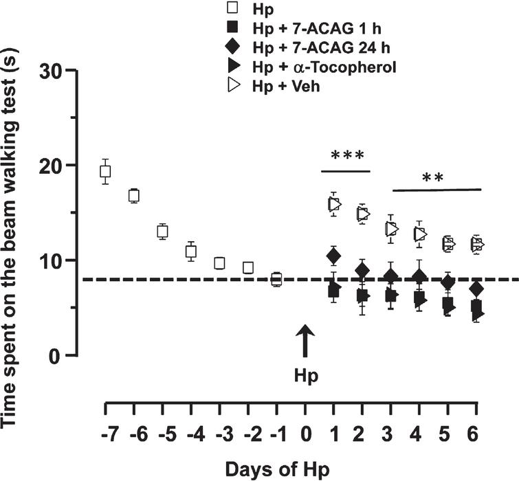 Application of 7-ACAG increases the functional recovery of rats with motor deficit induced by hemiplegia. Temporal evolution of time spent on the Beam walking test (BWT). Results are the mean ± Standard error of the mean (SEM). Rats learned the task in 7 days. On day 8, rats were submitted to Hemiplegia (Hp) and a significant motor deficit was observed. Recovery slope is shown in white squares. 7-ACAG administered either 1h (black squares) or 24h (black rhombus) after Hp induction significantly decreases motor deficit. α-Tocopherol applied 1h after Hp induction exhibits similar results to those induced by 7-ACAG. The vehicle had no positive effects on the motor deficit caused by Hp (white triangles).