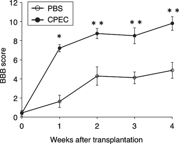 BBB scores. Effect of CPEC transplantation on locomotor behaviors. There are significant differences at 1-4 w-TP between the PBS-injected and CPEC-transplanted rats, at P < 0.0005 (*) and P < 0.005 (**).