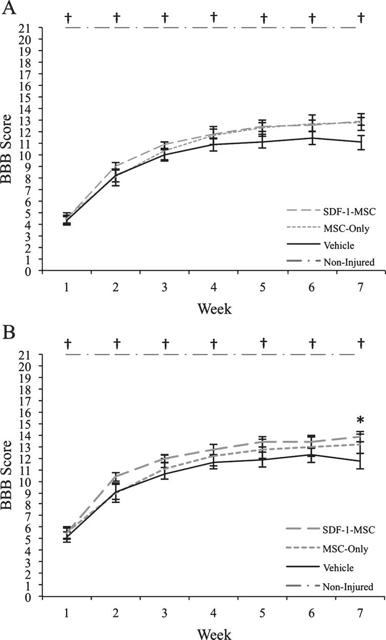 Behavioral Results. Prior to transplantation at 9-days post-injury, rats were distributed into groups to ensure an equal baseline mean (BBB scores ranged from 1–9). (A) When analyzing rats with the full range of baseline scores, transplantations of SDF-1-MSCs or MSCs-alone did not improve motor performance over the 7-weeks post-injury assessment period. (B) When rats with more severe injuries were removed from analysis (BBB scores ranged from 3–9), significant improvements were found with SDF-1-MSC treated rats. *p < 0.05 compared with vehicle-treated rats. †p < 0.005 compared with all other groups.