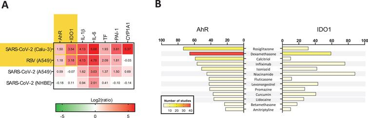 Data mining on the modulation of AhR and IDO1 genes. (A) Conditions under which both AhR and IDO1 genes undergo upregulation were identified using biclustering tool of Genevestigator 7.6.0 (www.genevestigator.com) (Hruz et al., 2008). Query was limited to mRNAseq data from human lung tissues and cell lines. The results are marked with yellow background. It was revealed that significant up-regulation of AHR and IDO1 occurred in the lung adenocarcinoma cell line Calu-3 samples infected with SARS-CoV-2 (USA-WA1/2020 isolate) at a MOI (multiplicity of infection) of 2 and harvested 24 h post-infection (hpi) versus mock-infected Calu-3 cells. Similar observation was made in human lung adenocarcinoma cell line A549 samples infected with respiratory syncytial virus (RSV) A2 strain (MOI 2; 24 hpi) in comparison to mock control (Blanco-Melo et al., 2020). There were no other experimental results demonstrating concurrent upregulation of AHR and IDO1 in the human lung in the Genevestigator database encompassing 2536 mRNAseq studies. Initial heatmap (yellow background) was extended with data on the expression profile of genes driving the AhR-dependent pathologies: inflammation, thrombosis, and fibrosis (Fig. 2). The specific genes code for (1) proinflammatory interleukin 1β (IL–1β) and interleukin 6 (IL-6); (2) thromboembolism-related tissue factor (TF) and plasminogen activator inhibitor-1 (PAI-1); and (3) fibrosis-related P450 cytochrome 1A1 (CYP1A1). Data from A549 and Normal Human Bronchial Epithelial (NHBE) cells infected with SARS-CoV-2 (MOI 2, 24 hpi) were provided for reference. (B) Medications modulating the expression of AhR and IDO1 genes were identified using Pharmaco Atlas of the BaseSpace Correlation Engine software suite (www.nextbio.com) (Kupershmidt et al., 2010). A p-value significance cutoff of 0.05 (without any multiple testing correction) and a minimum absolute fold-change cutoff of 1.2 were used by the software for identification of medications affecting ex