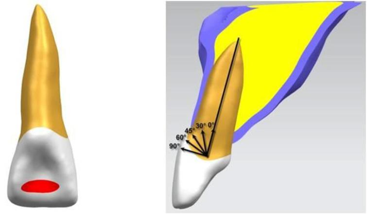 The location and different angles of the loading stress.