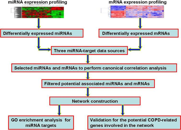 The flowchart of our work. Firstly, we identified the differentially expressed miRNAs and mRNAs. Secondly, by integrating three miRNA-target sources, we performed canonical correlation analysis to identify potential COPD-related miRNAs and mRNAs. Thirdly, we constructed and expanded miRNA-mRNA network. Finally, for miRNAs involved in the network, we performed GO functional enrichment analysis of their targets. We also performed the validation of potential COPD-related genes involved in the consturction network, including ROC curve analysis, SVM classification, and cluster analysis.