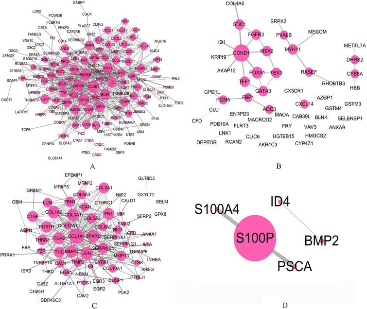 The relationships for genes involved in four groups respectively based on PPI network. The larger circle indicates the gene with higher degree. (A) All basal-related genes for two cancers. (B) All luminal-related genes for two cancers. (C) Basal-related genes for MIBC whereas luminal-related for breast cancer. (D) Luminal-related genes for MIBC whereas basal-related for breast cancer.
