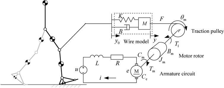 Mechanism model of the WDM.
