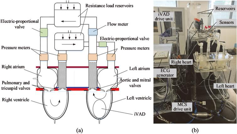 (a) Schematic of an experimental mock cardiovascular system, (b) Picture of the experimental setup.