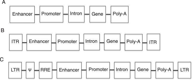Diagram of therapeutic nucleotide sequences  (TNS). A. Non-viral TNS have an enhancer (optional) for increased transgene expression, a promoter (necessary) to  drive transgene expression, an intron (optional) for increase gene expression, a transgene to correct the genetic  defect and a polyadenylation (poly-A) signal (necessary) for proper translation. B. Adeno-associated virus TNS  contain all the elements of non-viral TNS as well as inverted terminal repeats (ITR), which are necessary for the  packaging of the TNS into the virus. C. Retroviral TNS contain the elements necessary for proper transgene  expression, and retroviral elements and coding sequences. The Ψ element is a retroviral packaging signal.  The retroviral long terminal repeats (LTR) mediated integration of retroviral DNA and have promoter activity,  which is sometimes inactivated to prevent insertional mutagenesis. The rev-responsive element (RRE) is necessary  for post-transcriptional transport of viral RNA during retroviral packaging.