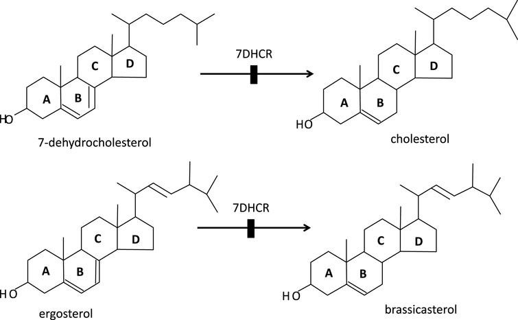 a: Humans; inability to convert 7-dehydrocholesterol to cholesterol due to mutant 7-dehydrocholesterol reductase causes RSH (so-called Smith-Lemli-Opitz, SLO) syndrome in the homozygous survivors of the severe embryonic and fetal selection against them. b: Plants (Arabidopsis thaliana) corresponding deficiency of this highly conserved enzyme with inability to convert ergosterol into brassicasterol causes the dwarf 5 mutations of A. thaliana.